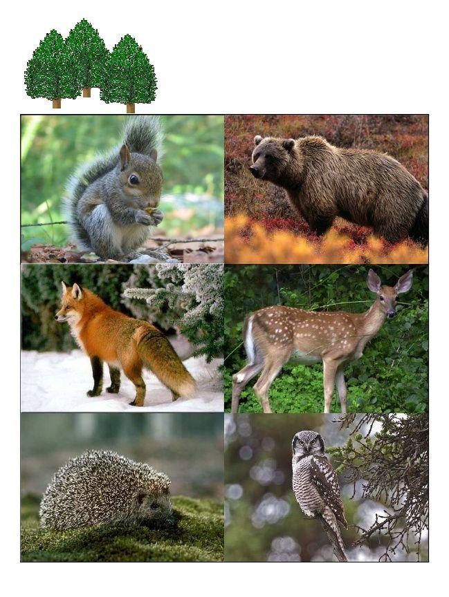 Animal Biomes Animals, Biomes, Animal habitats