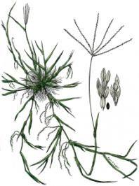 The 10 Worst Garden Weeds
