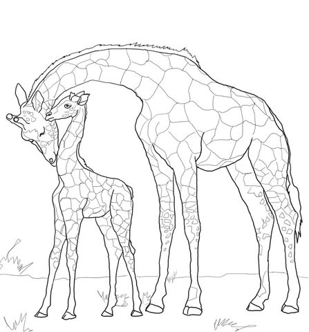 Baby Giraffe and Mother coloring