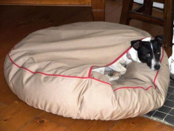 Fox terrier, Molly - Barka Parka