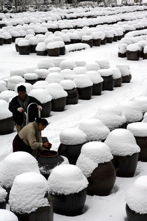 Looks almost like a land of cupcakes: korean bean paste jars in the winter. How beautiful is this.