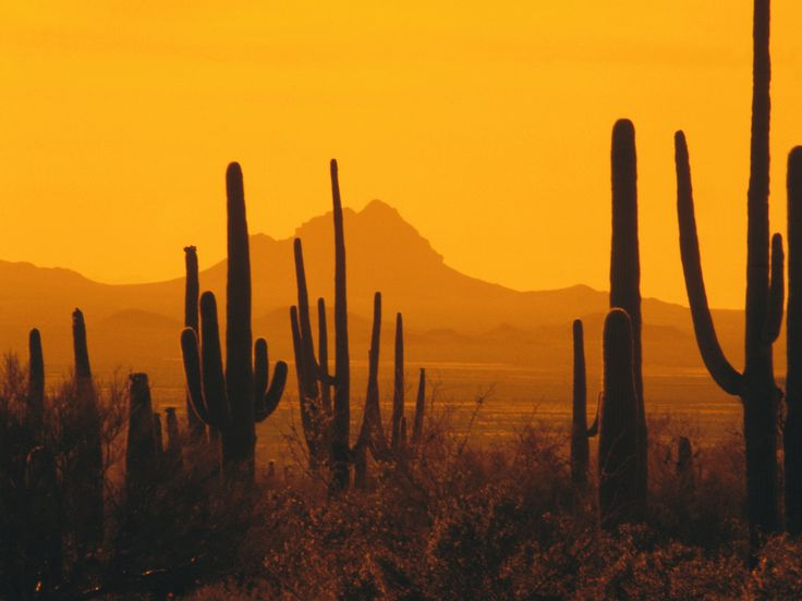 american southwest scenery | How Might Climate Change Affect Saguaro National Park