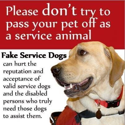 Companion dogs are not service dogs. I'm horrified that people think they can get away with this.