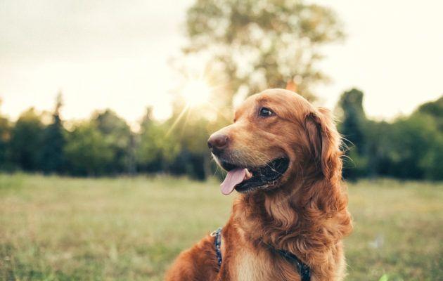 Onko koirasi laiskottelua rakastava härkä, älykäs kaksonen vai rapsutuksista nauttiva rapu? Lue, mitä tähdet paljastavat koirasi persoonallisuudesta.