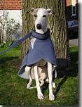 bluewhippets - Bing Images