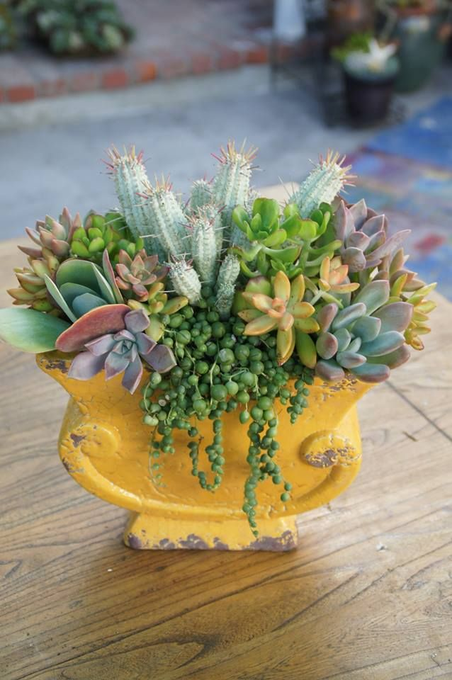 Bright succulent arrangement by Simply Succulent https://www.facebook.com/pages/Simply-Succulent/222665291108990