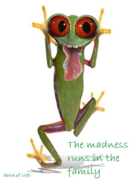 LOLFunny Pics, Laugh, Quotes, Pills Kicks, Funny Stuff, Humor, Things, Frogs, Happy Pills