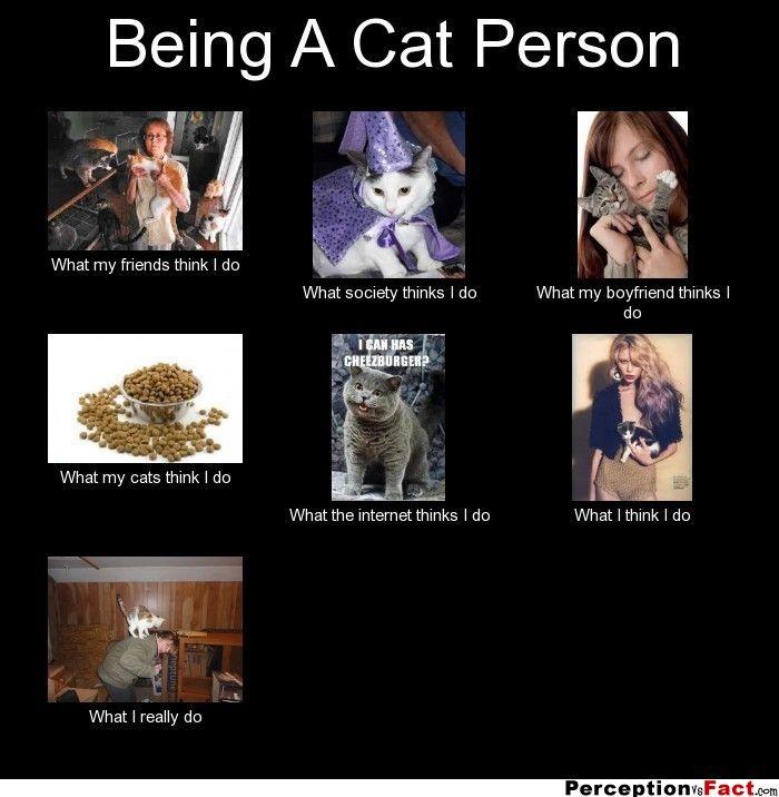 do cats have cannabinoid receptors