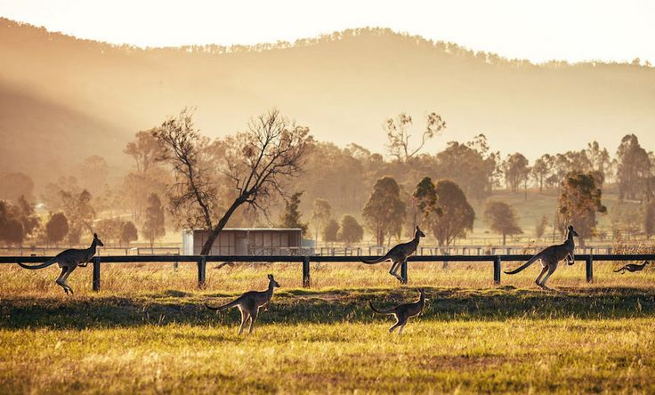 Escape City Stress With Our Guide To Hunter Valley Wine Tours - #Australia, #HunterValley, #Wine, #Wineries