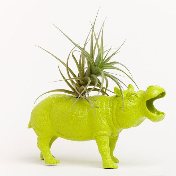 chartreuse hippo