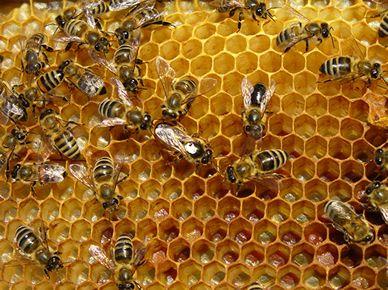 Alveolos en panal de abejas