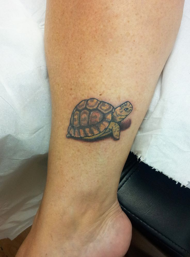tortoise tattoo - Google Search