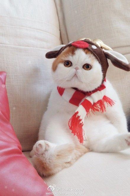 snoopy the cat | Tumblr