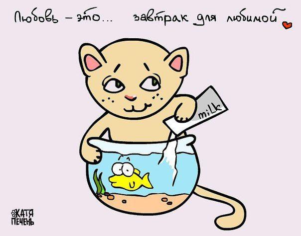любовь это, кошка, кот, рыжий кот, молоко в аквариум, рыбка, завтрак