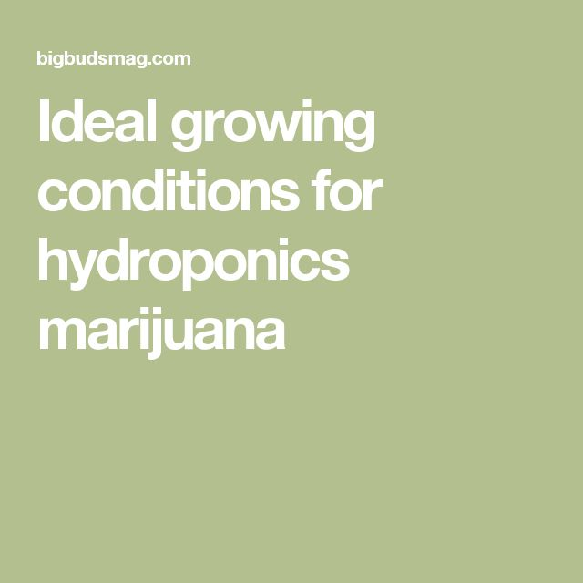 Ideal growing conditions for hydroponics marijuana