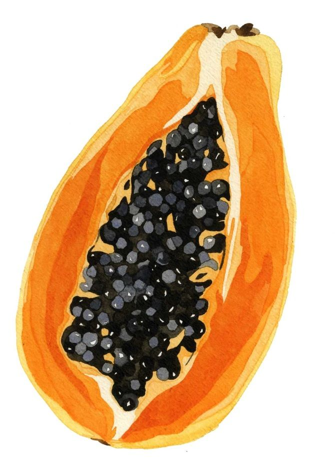Food Illustration - Sophie Brabbins