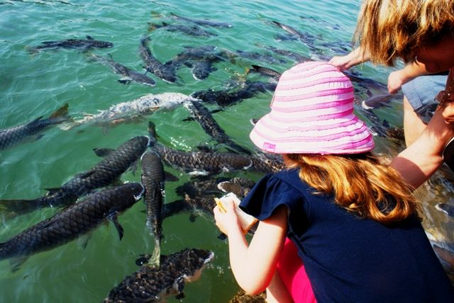 Feeding the fish at Aquascene, Darwin, Australia.  Sharing this childhood memory with my own child was such a special day