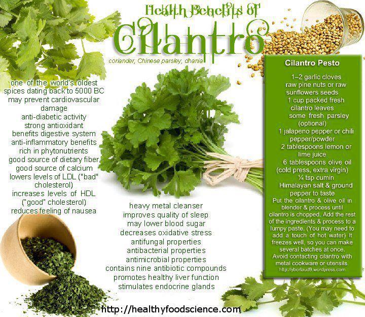 Cilantro Health Benefits = Coriander Health Benefits | Healthy Food Science - the Health Benefits of Diet