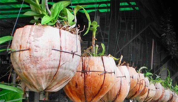 Alternativa sustentável!!! Você sabia que o resíduo representado pela casca do coco verde é um problema ambiental nacional? Segundo a Embrapa, cerca de 70% de todo o lixo gerado nas praias brasileiras são cascas de coco verde, então vamos aprender como r
