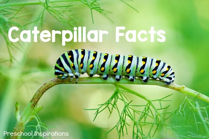 Fun Butterfly Facts for Kids