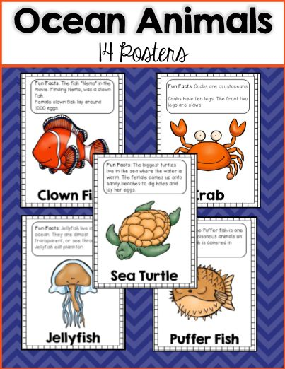 Are you teaching your students about ocean animals? These ocean animal posters are a great addition to your unit! There are 14 posters in this packet and they each contain a bright colorful picture of the ocean animal, the name of the animal, and some fun facts about each animal. Great for a bulletin board display!