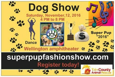 Super pup 2016 is coming to the Wellington Amphitheater on November 12th from 4 p.m. to 8 p.m. you still have time to register and compete with your best friend in this competition! All dogs are welcome to compete register online today win cash prizes trophies and awards! superpupfashionshow.com  #mychamp #bestfriendforlife #mydog #Dance #dogshow  #Wellingtonamphitheater #Tricounty #letsrock #Holly #HollyGrove #MySouthFloridaDJ #mysfldj #compete