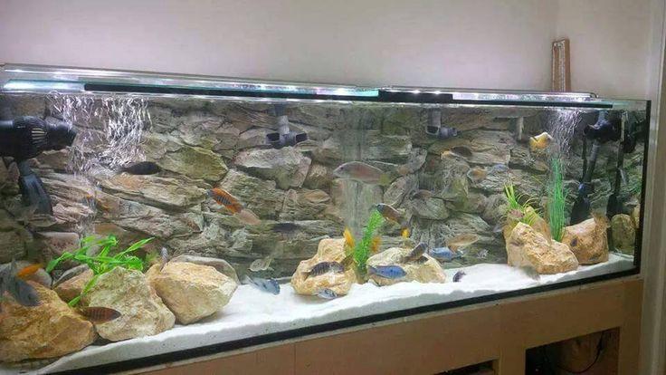 30 Gallon Aquarium Tank
