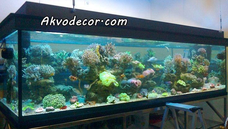Paket Aquarium Air Laut Komplit