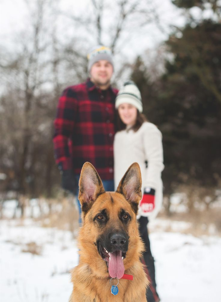 Winter Engagement Photos with Dog - Moments -by Lauren - Hamilton, ON