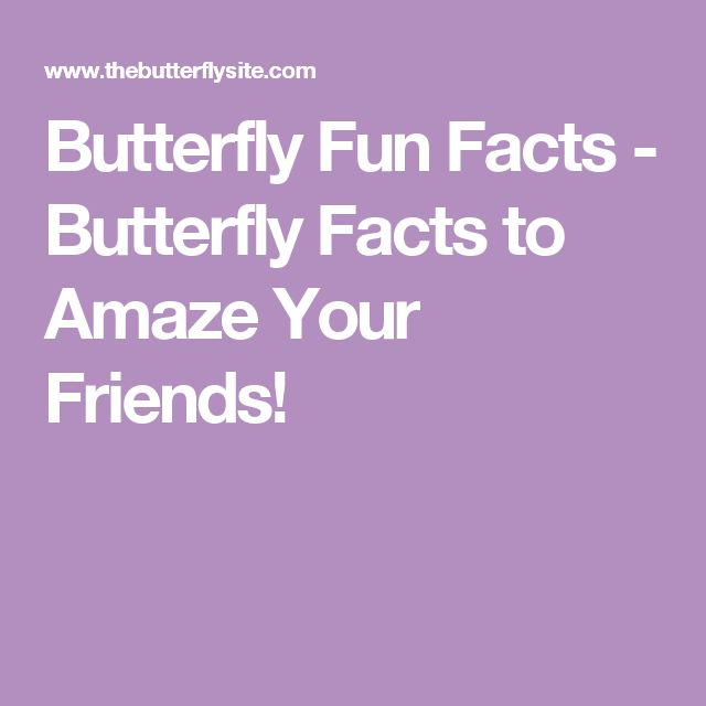 Butterfly Fun Facts - Butterfly Facts to Amaze Your Friends!
