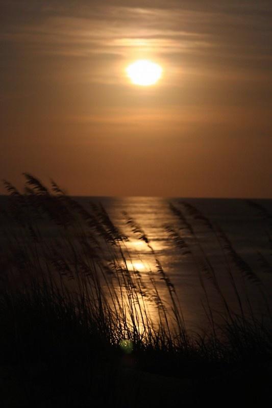 Isle of Palms: Isle Of Palms, South Carolina Gorge, South Carolina Would, Favorite Places, Favorite Vacations, Favorite Cities, Vacations Spots, Summer 2011 Moonglow, Carolina Gorge Sun