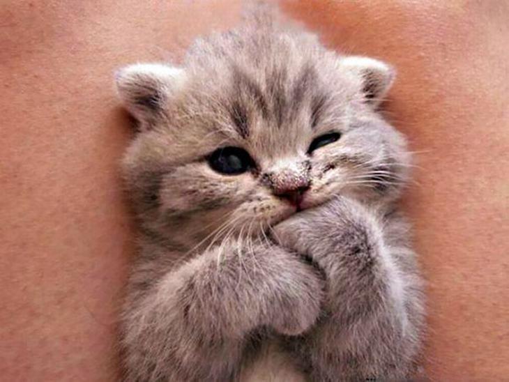 Que fofos! 20 gatinhos que você vai querer levar para casa!                                                                                                                                                                                 Mais