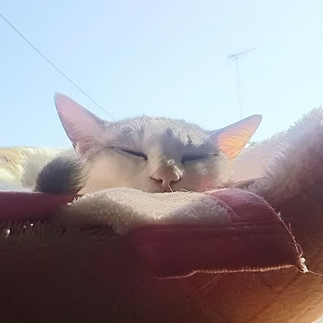 こころ  #お天気#晴れ#雲ひとつない #窓際で #朝日を浴びながら#ねこ#猫#にゃんこ#愛猫#にゃんすたぐらむ #cat#catstagram