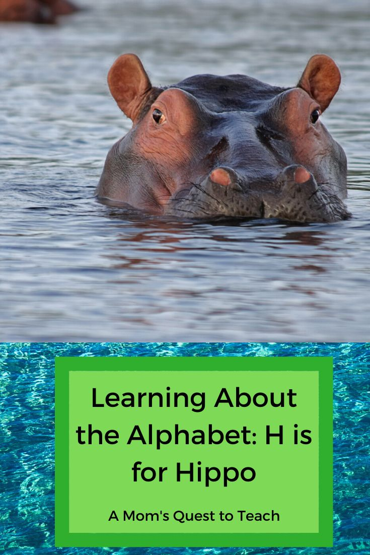 Learning about the alphabet h is for hippo hippopotamus
