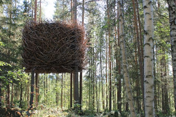 Sweden's new wildernest resort, Treehotel, features a nest-like room built in the trees and affording a panoramic view of the forest and nearby river