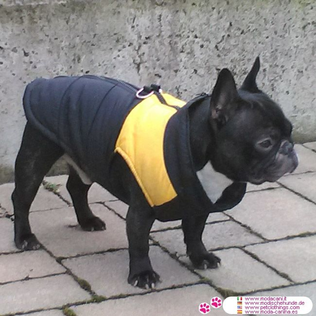 Gelb Windjacke für Hunde #Hunde #Bulldogge - Ein Neuzugang in der Kollektion von Hund Mode: Das Gelb und Schwarz ärmellose Windjacke für Hunde: ohne Ärmel, aus Nylon und terylene gemacht