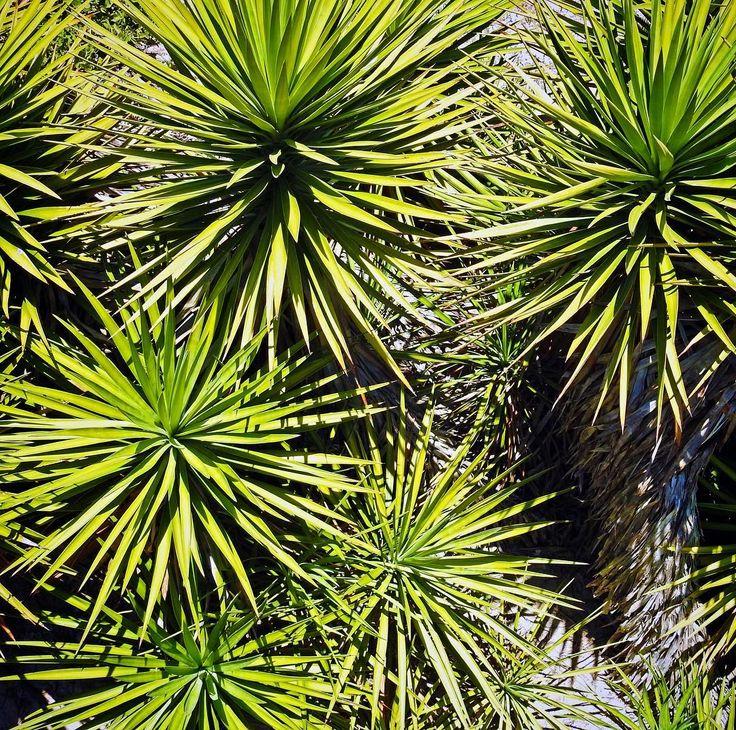 Instagram island species plants