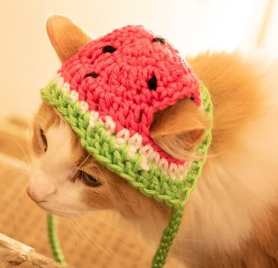Pattern Only Crochet Watermelon Furbaby Hat Cat Small Dog Beginner Level Downloadable Pet Costume Pet Play Adorable Pet Hats Cat Hat Crochet Cat Hat Cat Hat Pattern Crochet Dog Hat
