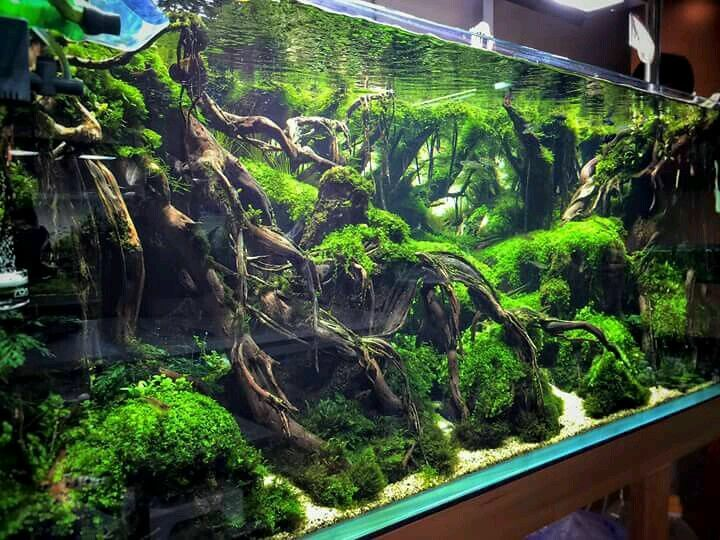 Tree Roots Aqua Scape Driftwood Aquarium Design Aquarium Design Aquascape Aquarium Aquarium Landscape
