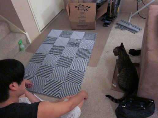 D.I.Y. Litter Mat | Kraftsy Kitties..Genuis