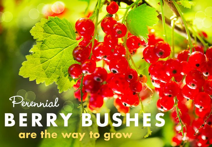 For Perennial Fruit Gardens, Berries Are the Way to Grow   Inhabitat - Sustainable Design Innovation, Eco Architecture, Green Building
