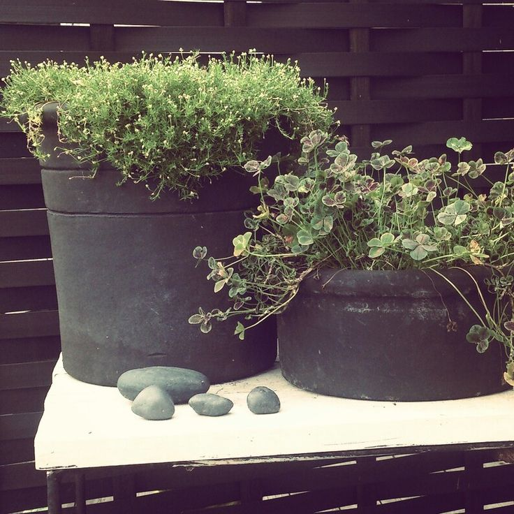 My garden in Sweden 202 - pots from Zetas and Löddeköpinge /Catarina Persson