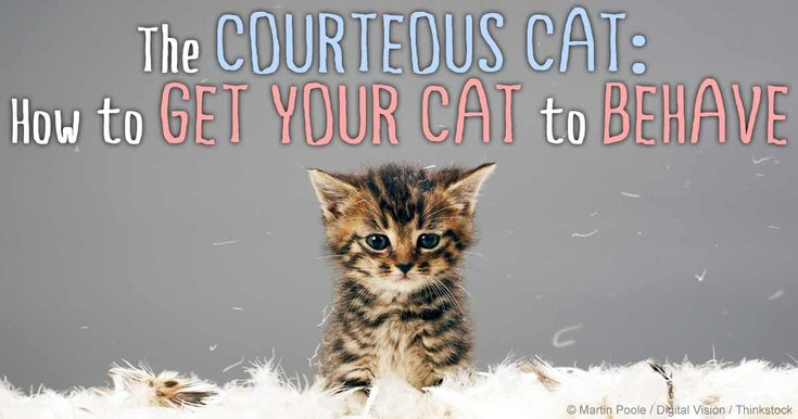 Here are some tips to help you handle your kitty's aggressive tendencies, litterbox habits, and other behavior problems. http://healthypets.mercola.com/sites/healthypets/archive/2014/08/04/cat-behavior-problems.aspx