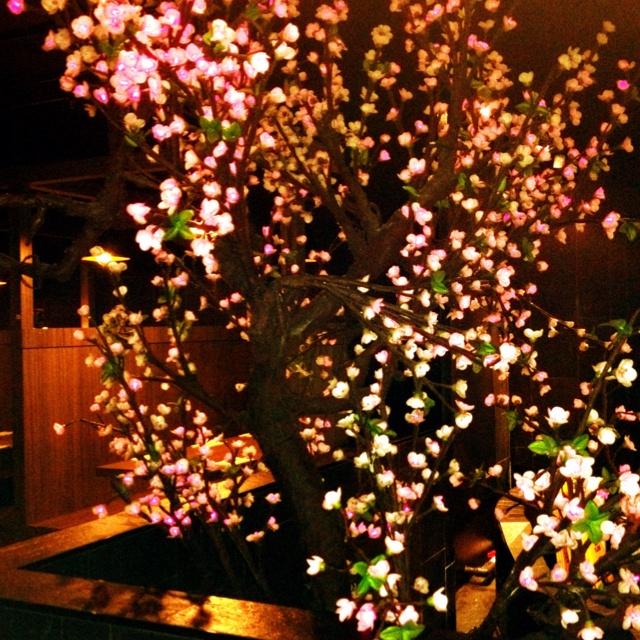 25.02.12 Mizuya, Sakura