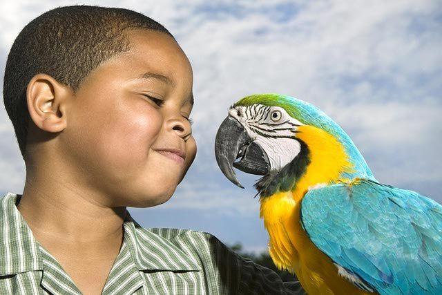 The 5 Worst Pet Bird Species for Kids: Macaws