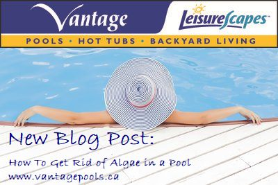 how to get rid of algae in swimming pool
