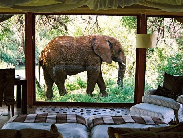 Makanyane Safari Lodge in South Africa #Explore #CortneyLoves: Southafrica, Buckets Lists, Safari Lodges, Dreams, Makanyan Safari, Africans Safari, Elephant, South Africa, View