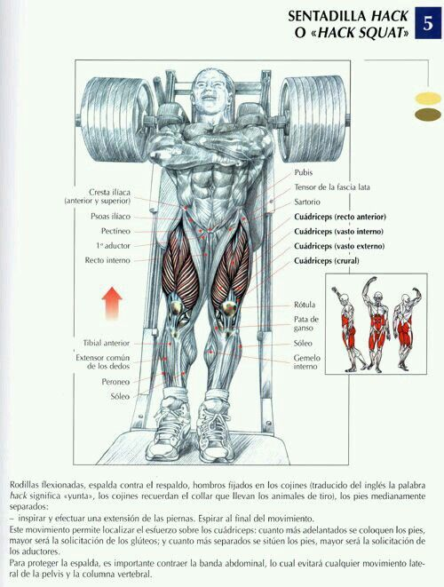 127 besten Fisiologia del ejercicio Bilder auf Pinterest ...