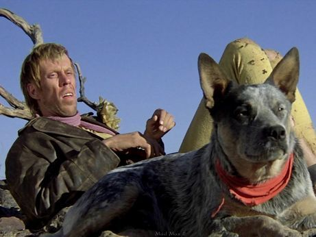 Mad Max's dog, Dog. One of the coolest cattle dogs of all, seen here with the Gyro Captain. From the movie The Road Warrior.