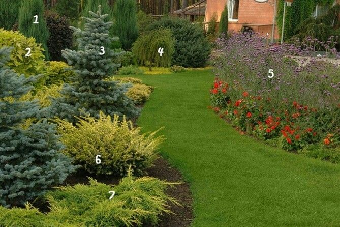 Ornamental Landscaping Bushes : Best images about passion conif?res on
